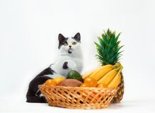 Black and white fat cat raised a paw over a basket of tropical fruits. Black and white cat raised a paw over a basket of tropical fruits stock photo