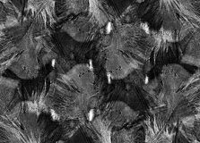 Black and white feather background Royalty Free Stock Photography