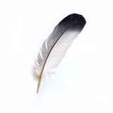 Feather. A black white feather on white background Stock Images