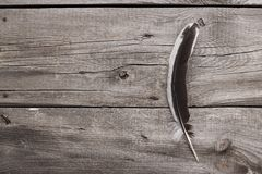 Black and white feather on wooden table background Royalty Free Stock Photo