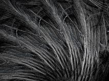 Black and white feathers. Abstract fractal background created with apophysis Stock Photo