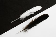 Black and White feathers Stock Photography