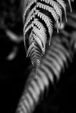 Black and white fern Stock Photos