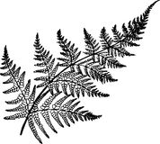 Black and white fern illustration. Ancient plant. Fractal fern Stock Photos