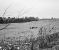 Black and white field royalty free stock photography