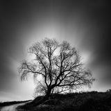 Black and White, fine Art landscape image with tree