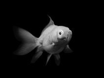 Black and white fish Stock Images