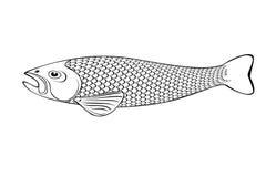 Black and white fish illustration. Black and white stylish fish illustration with skale royalty free illustration