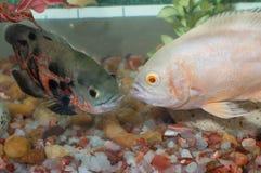 Black and White fish met stock photo