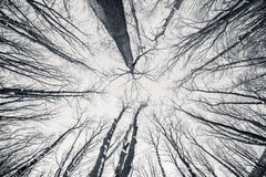 Black and white fisheye d winter trees Royalty Free Stock Image