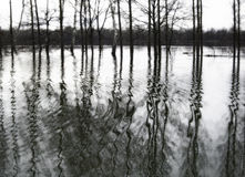 Black and white flooded landscape. Black and white still life photography of flooded landscape Stock Photo
