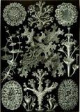 Black And White, Flora, Monochrome Photography, Pattern stock photos