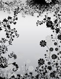 Black and white floral bacground Stock Photos