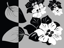 Black and white floral card. Illustration Royalty Free Stock Images