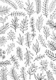 Black and white floral hand drawn farmhouse style outlined twigs branches  background. Texture Stock Photo