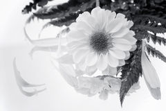 Black And White Flower. With Reflection Stock Photo