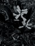 Black and white flower summer snow Stock Image