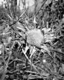 Black and white flower Stock Image