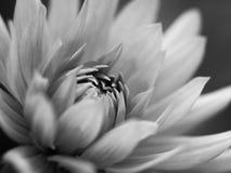 Black and White Flower Stock Photo