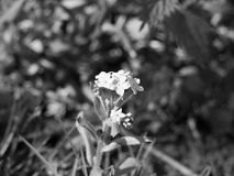 Black and White Flower Head in the Middle of Screen Stock Images