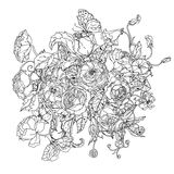 Black and white. Flower roses Stock Image