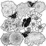 black and white flowers and butterflies Stock Images