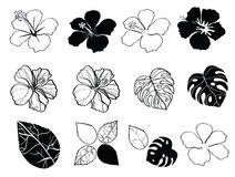 Black and white flowers of hibiscus. Isolated on white vector illustration eps10 Stock Images