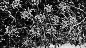 Black and white flowers and plant Royalty Free Stock Photo