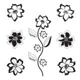 Black and white flowers Stock Image