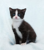 Black and white fluffy kitten with blue eyes sits and stares Stock Image