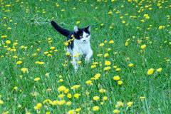 Black and white fluffy kitten stock photo