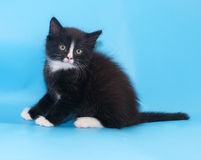 Black and white fluffy kitten recoiled Royalty Free Stock Images