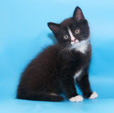 Black and white fluffy kitten sits Royalty Free Stock Photo