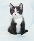 Black and white fluffy kitten sitting Stock Images