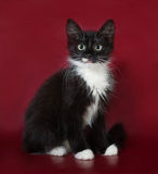Black and white fluffy kitten sitting on burgundy Royalty Free Stock Photography