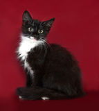 Black and white fluffy kitten sitting on burgundy Stock Photos