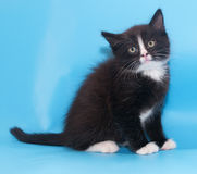 Black and white fluffy kitten sitting Stock Photo