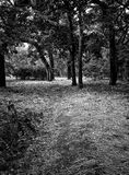 Forest in black and white Stock Images