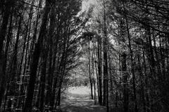 Black-and-white, Forest, Monochrome Stock Photo