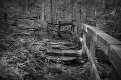 Black and white forested trail. A black and white image of a forested trail in the Appalachian Mountains with stone steps and a wooden handrail Royalty Free Stock Photos