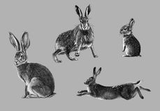 Freehand sketch of wild rabbit. Black and white freehand sketch of wild rabbit Stock Illustration