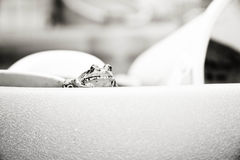 Black and white frog Royalty Free Stock Images