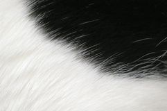 Black and white fur background Stock Image