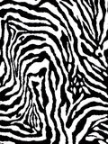 Black and white fur zebra pattern. Stock Photography