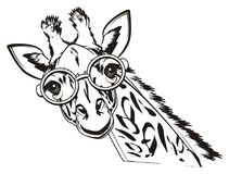 Not colored giraffe in glasses. Black and white giraffe in glasses on a white background Royalty Free Stock Photography