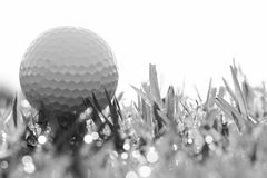 Black and white of golf ball on grass with bokeh Royalty Free Stock Image