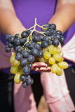 Black and white grapes in female hands Stock Photos