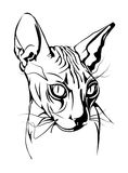 Black-white  graphic portrait of the  sphinx cat. Stock Photography