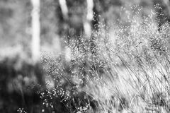 Black and white grass blades in daylight background Stock Photos