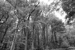 Black and White Great Smoky Mountain Park Landscape Stock Photos